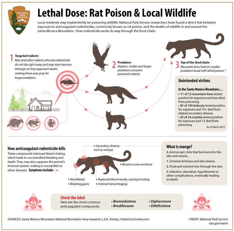 Rat poison and local wildlife