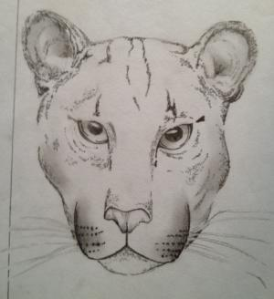 Image of This drawing of a cougar was done by an inmate in board member Marc Bekoff's Roots & Shoots group at the Boulder County Jail.